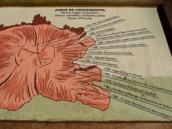 Panel informativo sobre unos de los castaños derribados por el ciclón Hortensia en 1984